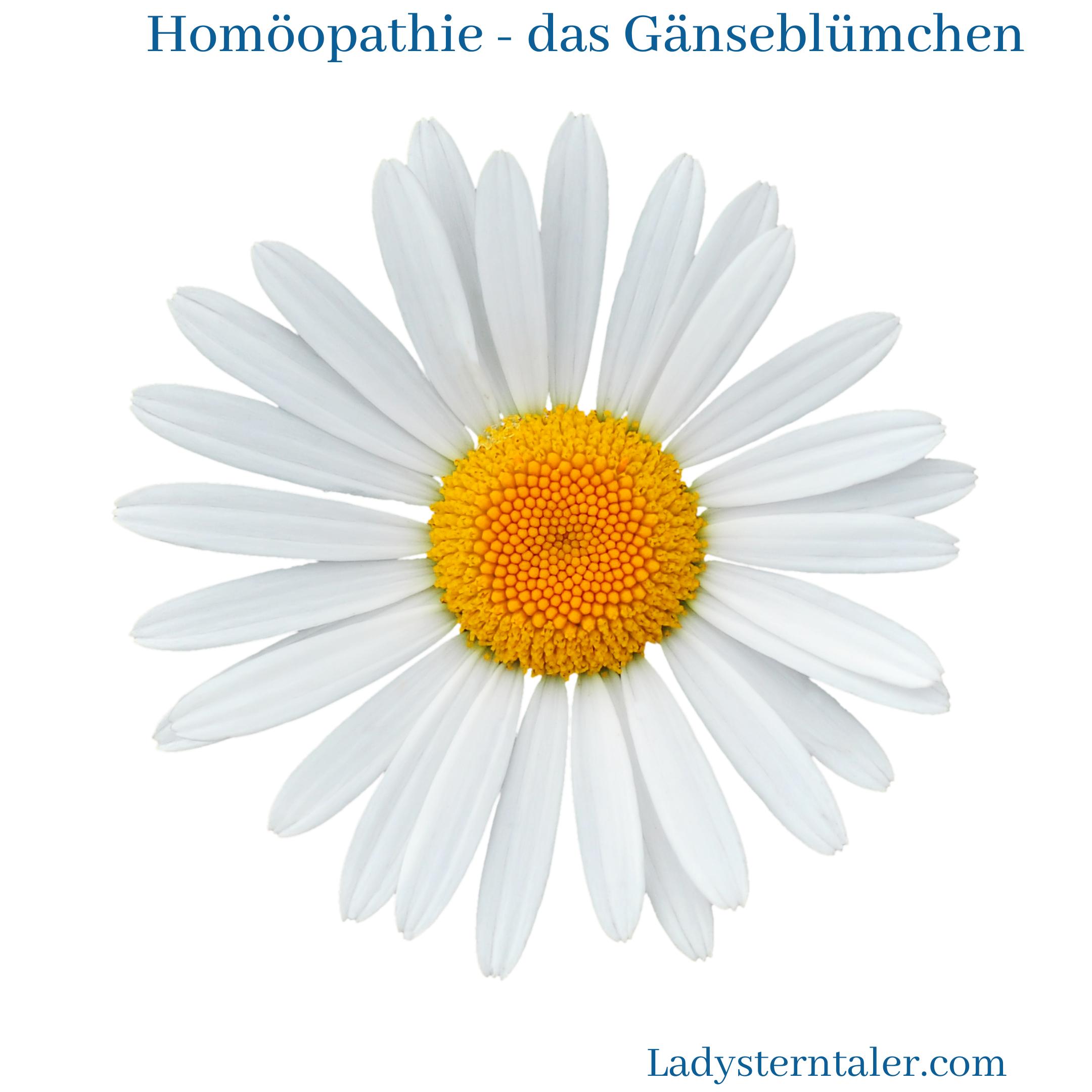 Homöopathie - Gänseblümchen (1)